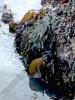 Mixed seaweed